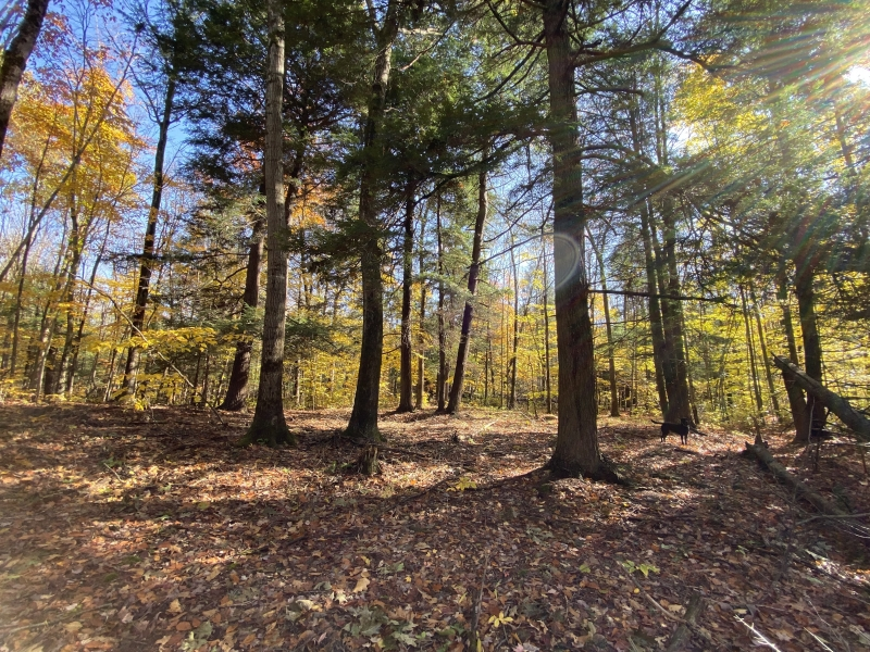 woods-lot-20-II